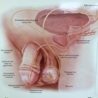 anatomiya.nwsie